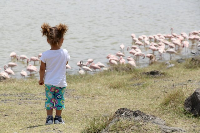 ellyflamingoes