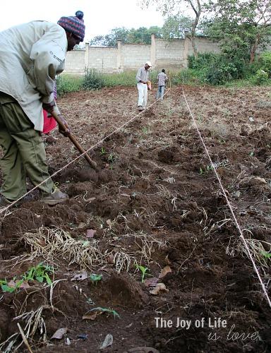diggingrows