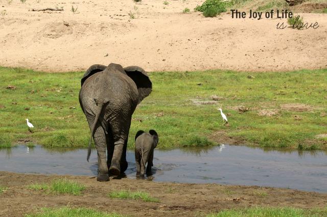 mama-and-baby-elephant-tarangire