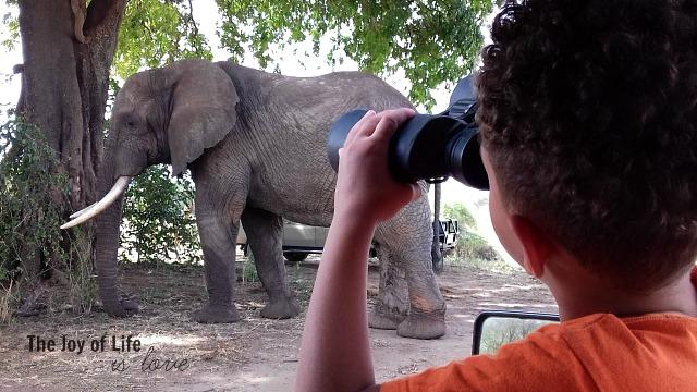 max-watching-elephant-with-binoculars